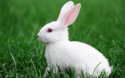 Rabbit, Rabbit, Rabbit — Happy February